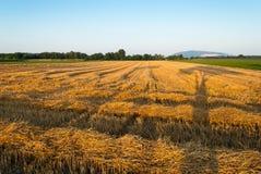 Сжатое поле Стоковая Фотография