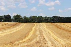 сжатое поле Стоковое фото RF