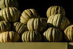 Сжатые гигантские тыквы подготавливают для продажи на счетчике стоковые изображения