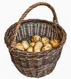 Сжатые картошки в старой корзине wicker Стоковые Изображения RF