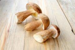 Сжатые одичалые грибы porcini на деревянной предпосылке Стоковая Фотография