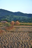 Сжатые рисовые поля Стоковое Фото