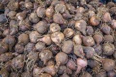 Сжатый зрелый овощ корня свеклы в итальянском vagetarian рынке Стоковая Фотография