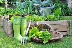 Сжатый салат Стоковые Фото