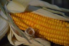 Сжатый стержень кукурузного початка стоковые изображения