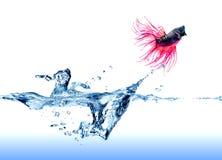 Сиамские воюя рыбы скача из воды Стоковые Фотографии RF