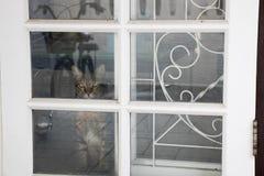 Сиамский кот ждет к его предпринимателю стоковая фотография rf