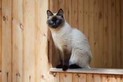 Сиамский кот сидя на перилах деревянного дома стоковое фото