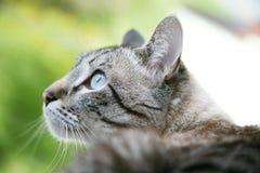 Сиамский кот стоковое изображение