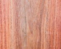Сиамский Rosewood Стоковое Изображение