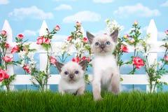 2 сиамских котят в саде Стоковая Фотография RF