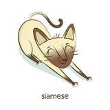 сиамско Характер кота на белизне Стоковые Изображения