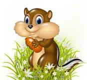 Сибирский бурундук шаржа держа арахис Стоковое Изображение RF