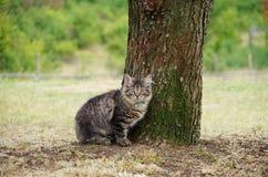 Сибирский котенок на траве Стоковое Изображение