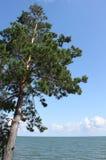 сибиряк ландшафта Стоковое Изображение