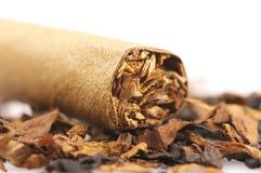 Сигара и табак Стоковая Фотография