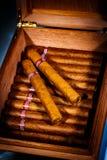 Сигары в humidor Стоковая Фотография