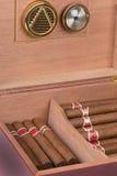 Сигары в humidor Стоковые Изображения