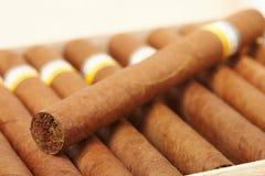 сигары коробки кубинские Стоковые Изображения RF