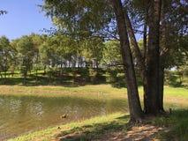 Сидеть на лужайке смотря спокойное озеро стоковые фотографии rf