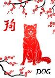 Сидя собака и восточная вишня разветвляют на whit Стоковое Изображение RF