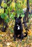 Сидя собака Стоковое фото RF