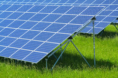 сила завода солнечная Стоковые Изображения