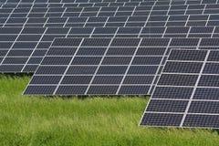 сила завода солнечная стоковая фотография rf