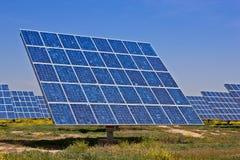 сила завода солнечная Стоковое Фото