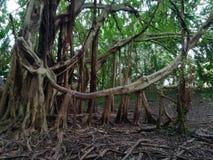Сила леса природы в Гаваи стоковое изображение rf