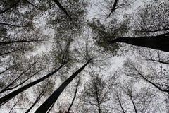 Сила леса стоковое изображение rf