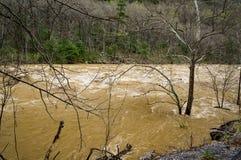 Сила речных порогов на реке Maury стоковые изображения rf