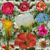 сила цветка Стоковые Изображения