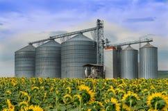 силосохранилище Поле с солнцецветами Стоковые Фотографии RF