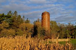 Силосохранилище Od, учреждение амбара и кукурузное поле Стоковые Изображения