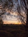 Силуэта дерева переднего плана сцены захода солнца цвета b темного красивые Стоковые Изображения