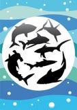 Силуэты вектора акул Стоковые Фото