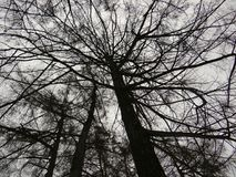 Силуэты ветвей дерева против неба зимы Стоковые Фотографии RF