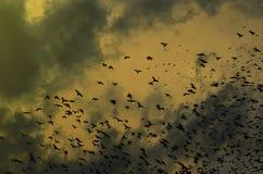 Силуэты ворон на драматической предпосылке неба с облаками Стоковые Фотографии RF