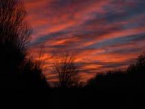 Силуэты дерева перед рассветом стоковые фото