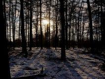 Силуэты деревьев в лесе зимы елевом со снегом на поле против солнца settig стоковая фотография