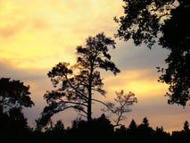 Силуэты деревьев против пылая захода солнца Стоковые Фото