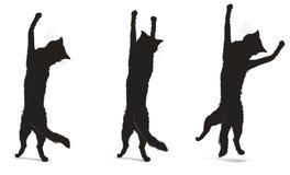 силуэты котов Стоковые Изображения RF