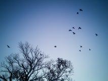 Силуэты летящих птиц и дерева Стоковые Изображения