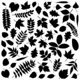 силуэты листьев собрания иллюстрация штока
