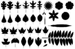 силуэты листьев Стоковые Изображения