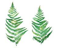 Силуэты лист папоротника леса, текстура акварели иллюстрация вектора