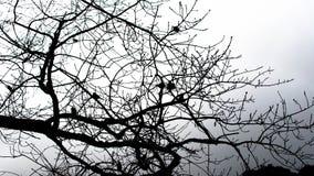 Силуэты малых птиц на ветвях без листьев стоковое фото rf