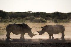 Силуэты носорога лицом к лицу стоковое изображение