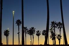 Силуэты пальм во время захода солнца Стоковое Изображение